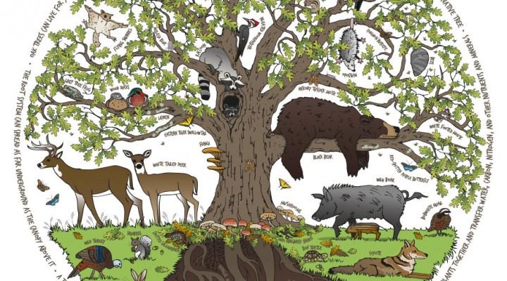 White oak tree detail
